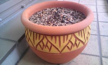 植木鉢.jpg