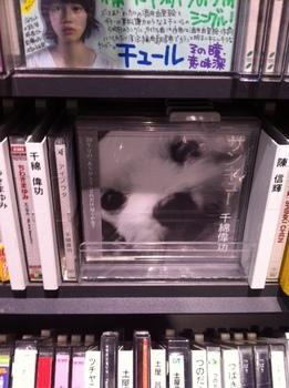 cd shop.jpg